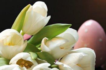 Easter Wellness