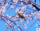 Marzo sul Lago di Vico